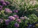 ogrod-bylinowy