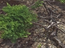 garden-bonsai