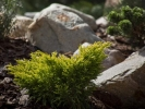 ogrod-skalny